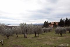 Vigna Del Lago36