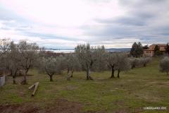 Vigna Del Lago41